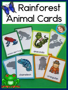 Rainforest Animal Cards for Read the Room, Matching Games, and More! Rainforest Facts For Kids, Rainforest Preschool, Rainforest Crafts, Preschool Jungle, Rainforest Habitat, Rainforest Theme, Rainforest Animals, Preschool Kindergarten, Frog Activities