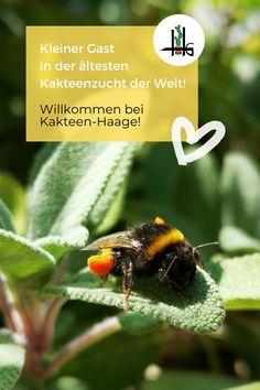 Wusstest du schon, dass die älteste #Kakteenzucht der Welt in Erfurt steht? Mitten in #Deutschland! Dieser magische Ort ist immer einen Besuch wert! Willkommen zur Bundesgartenschau 2021! #buga21 #erfurt #kakteenhaage #ulrichhaage #ilovecactus #kaktusliebe #biene #insekten