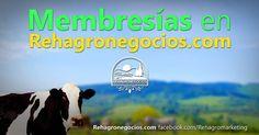 Membresía en Rehagronegocios.com + Sorteo    Tabla de contenidos  1 Membresía en Rehagronegocios.com  1.1 ¿Para qué una membresía en Rehagronegocios.com?  2 PARTICIPA EN EL SORTEO DE 6 MEMBRESÍAS.  2.0.0.1 Mira un ejemplo de cómo luciría tu perfil en nuestro directorio.  3 QUIERO PARTICIPAR ¡GRATIS!  3.0.1 No esperes más y comienza ya a crear tu perfil profesional y a obtener los beneficios de una presencia online con calidad.  3.0.2 Más de mi sitio