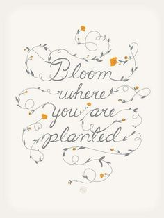 Plant the seed of faith in your heart and let it bloom.....
