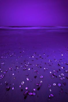 Deep Purple Beach ♥•*´¨`*•.¸