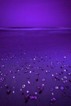 Deep Purple Beach ♥•*´¨`*•.¸