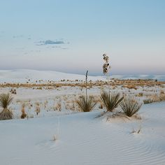 ck/ck (White Sands National Monument, NM)