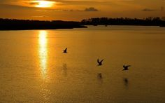 Birds Flying In The Sunset - https://www.highdefwallpaper.com/animals/birds-flying-in-the-sunset/ Birds Flying In The Sunset is an HD wallpaper posted in animals category. You can download Birds Flying In The Sunset HD wallpaper for your desktop, notebook, tablet or phone or you can edit the image, resize, crop, frame it so that will fit on your device.
