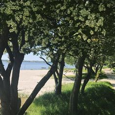 A stop for a moment 💛with this view ☀️ to the ocean, a boat and a beautyful tree with lot's of flowers made my day awesome ☀️. Love the nature 🌾_______________________________________  #love2live #lifestyle #denmark #scandinavianstyle #chic  #mitodense #odensebloggers #aarhus #københavn  #odense #beautiful  #fashion  #shootwithlove #lifestylephotography #livsstilsblog #details #fashionstyle  #fashionist  #domoreofwhatmakesyouhappy  #travel #explorer #blondehair #greeneyes #bloglovin…