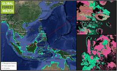 Global Forest Watch shows palm oil plantations occupying mangrove areas in Indonesian (top) and Malaysian (bottom) Borneo.