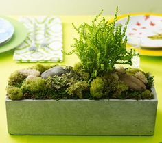 Clinton Kelly's impossible-to-kill Moss Centerpiece