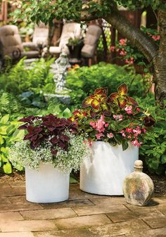 Surefire Rose Begonia, Diamond Frost, and ColorBlaze Dipt in Wine and Marooned Coleus all come together to create gorgeous containers that will hold the color even in full shade!