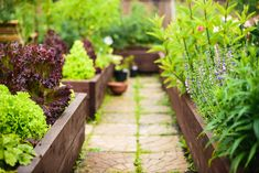 Get all the benefits of having a garden with these free raised planter box plans. Enjoy veggies, herbs, or flowers with less work and more fun. Planter Box Plans, Raised Planter Boxes, Building Raised Beds, Raised Bed Garden Design, Raised Vegetable Gardens, Vegetable Bed, Victory Garden, Vash, Companion Planting