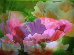 The Flora Collection Flora And Fauna, Poppy, Layers, Plants, Collection, Design, Layering, Plant
