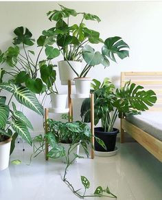 Monstera Monday pic photobombed by a naughty pot of Can you spot the big-leafed - greenvertluk