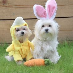 Aww Happy Easter