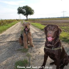 Two #dogs two #smiles one perfect day!