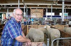 Livestock comfort at the fair: Tips for keeping your show animals cool and comfy. | Living the Country Life | http://www.livingthecountrylife.com/animals/livestock/livestock-comfort-at-the-fair/