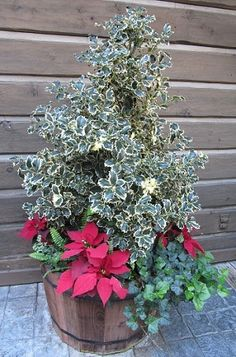 Festive Holiday Container idea using poinsettia, English ivy, holly, and fern, via Balcony Container Gardening Christmas Plants, Christmas Flowers, Christmas Decorations, Holiday Decorating, Christmas Stuff, Xmas, Container Plants, Container Gardening, Outside Plants