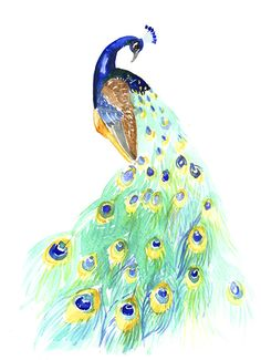 Peacock Watercolor Painting Art Print   Giclee Paper by EvaForest, $16.00