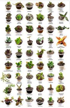 Названия   ВКонтакте Crassula Succulent, Propagating Succulents, Succulent Gardening, Succulent Terrarium, Container Gardening, Vertical Succulent Gardens, Succulent Wreath, Indoor Gardening, Types Of Succulents Plants