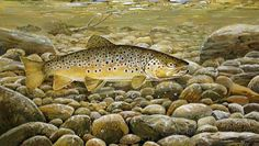 The Chase Brown Trout Print