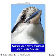 Laughing Kookaburra - an Australian Icon - Nerang, Gold Coast Hinterland, Queensland, Australia Australian Icons, Wild Birds, Gold Coast, Photo Cards, Poster Prints, Posters, Christmas Cards, Wildlife, Greeting Cards