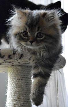 cute kitten by Lailah