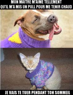 Chien et chat en pull