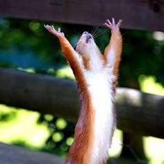 Moi, petit écureuil, demande votre aide ! Ô grands seigneurs des noix que vous êtes, à votre bon cœur !    Il vous suffit juste de liker pour me permettre de survivre ! 1 like = une noix qui m'aidera à tenir le coup pour l'hiver prochain…    Et sinon pour éviter qu'on vous rende des services à la noix vous pouvez toujours venir sur www.starofservice.com ! Petit écureuil vous donne rendez-vous pour la grande fête qui aura lieu en septembre pour le lancement officiel : restez connectés…