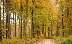 La gestión forestal y la energía biomasa como recurso sostenible - https://www.renovablesverdes.com/la-gestion-forestal-la-energia-biomasa-recurso-sostenible/