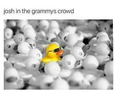 accurate>> omg every time they panned over the crowd you could ding josh he is highlighter<<and Jenna