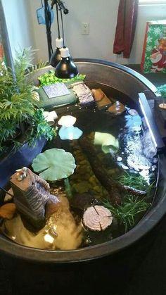 Un peque o estanque para tortugas jardin pinterest for Estanques pequenos para tortugas