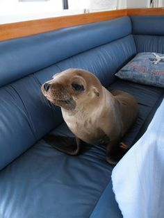 Seal jumps into boat and makes himself at home