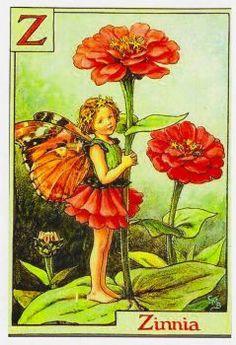 Zinnia fairy (140 pieces)