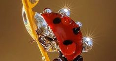 Lady bug -So beautiful!Great example of an amazing macro shot and ladybird are a great subject! Beautiful Bugs, Amazing Nature, Beautiful Pictures, Amazing Art, Nature Animals, Animals And Pets, Cute Animals, Nature Nature, Wild Nature