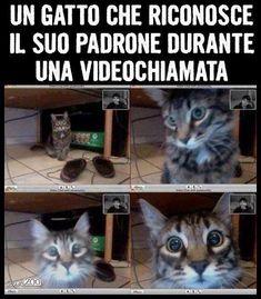 Immagini Divertenti http://enviarpostales.net/imagenes/immagini-divertenti-534/ #barzeletta #divertente #umorismo