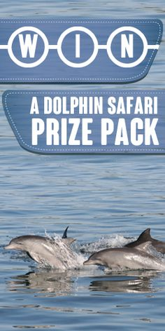 #WIN a #Dolphin Safari #Prize Pack! #competition