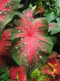 would like this plant in my garden.