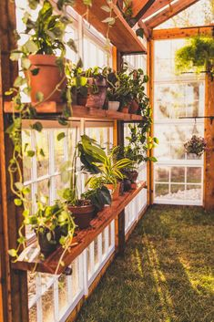 Greenhouse Farming is the process of cultivating crops and vegetable. If you have a greenhouse or are considering setting up one, then we'll share what greenhouse plants grows best inside.
