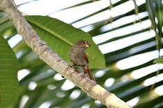 Birdview by Attila Molnar on YouPic Birds, Animals, Attila, Animales, Animaux, Bird, Animal Memes, Animal, Animais