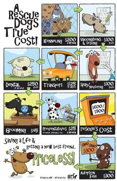 A rescue dogs TRUE cost! Think adoption fees are high? Think again... #adoptdontshop