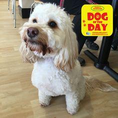 Amber Great Yarmouth, Dog Friends, Dog Days, Amber, Dogs, Animals, Animaux, Doggies, Animal
