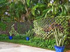 This vertical garden creates a living wall - an unexpected twist on the typical backyard.