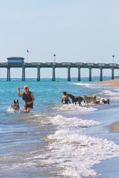 Brohard dog beach and the Venice Pier Venice, Florida. The only beach in Sarasota county where dogs are allowed. Photo by Justin Fennell. Venice Beach Florida, Lido Beach, Sarasota Florida, Florida Beaches, Beach Fun, Beach Trip, Beach Ideas, Florida Usa, Visit Florida
