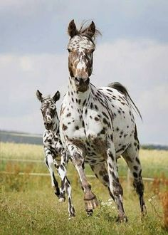 Mom and foal