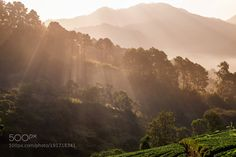 Strawberry Field plantation in North of Thai at Chiang Mai Thail by Jui_na