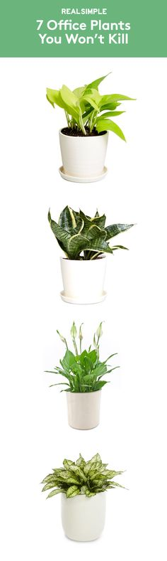 7 Office Plants You Won't Kill Fill your workspace with some greenery—it might make your workday better. Christopher Satch, The Sill's in-house plant expert, shares the best office plants that can withstand limited sunlight, freezing temps (thanks to th Office Cubicle, Home Office, Zen Office, Office Spaces, Work Cubicle Decor, Interior Office, Office Desks, Garden Office, Work Spaces