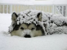 furry snow ball