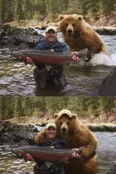 Funny Animal Memes To Make You Laugh Till You Drop - Lovely Animals World Funny Animal Memes, Stupid Funny Memes, Cute Funny Animals, Funny Relatable Memes, Wtf Funny, Funny Animal Pictures, Funny Cute, Funny Images, Hilarious