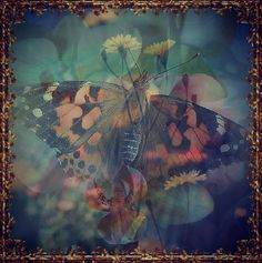 #Photographs #PaintedLady #Butterfly #Wings #WildLife #MiniOrchard #Botanical #Detail #Colour #DoubleExposure #Layers #Art #Image #InstaArt #Nature #Pattern