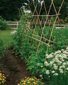 Potager Garden Who says a kitchen garden can't be beautiful? - Fine Gardening Article - Turn edible plantings into works of art with four design strategies Potager Garden, Veg Garden, Garden Trellis, Edible Garden, Veggie Gardens, Vegetable Gardening, Fruit Garden, Bean Trellis, Bamboo Trellis
