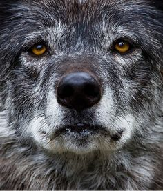 Look into my eyes and you will find the wisdom of the ancient ones