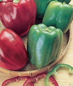 Sweet California Wonder Organic Pepper Seeds and Plants, Vegetable Gardening at Burpee.com